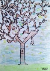 drvo_007