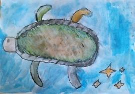 kornjaca011